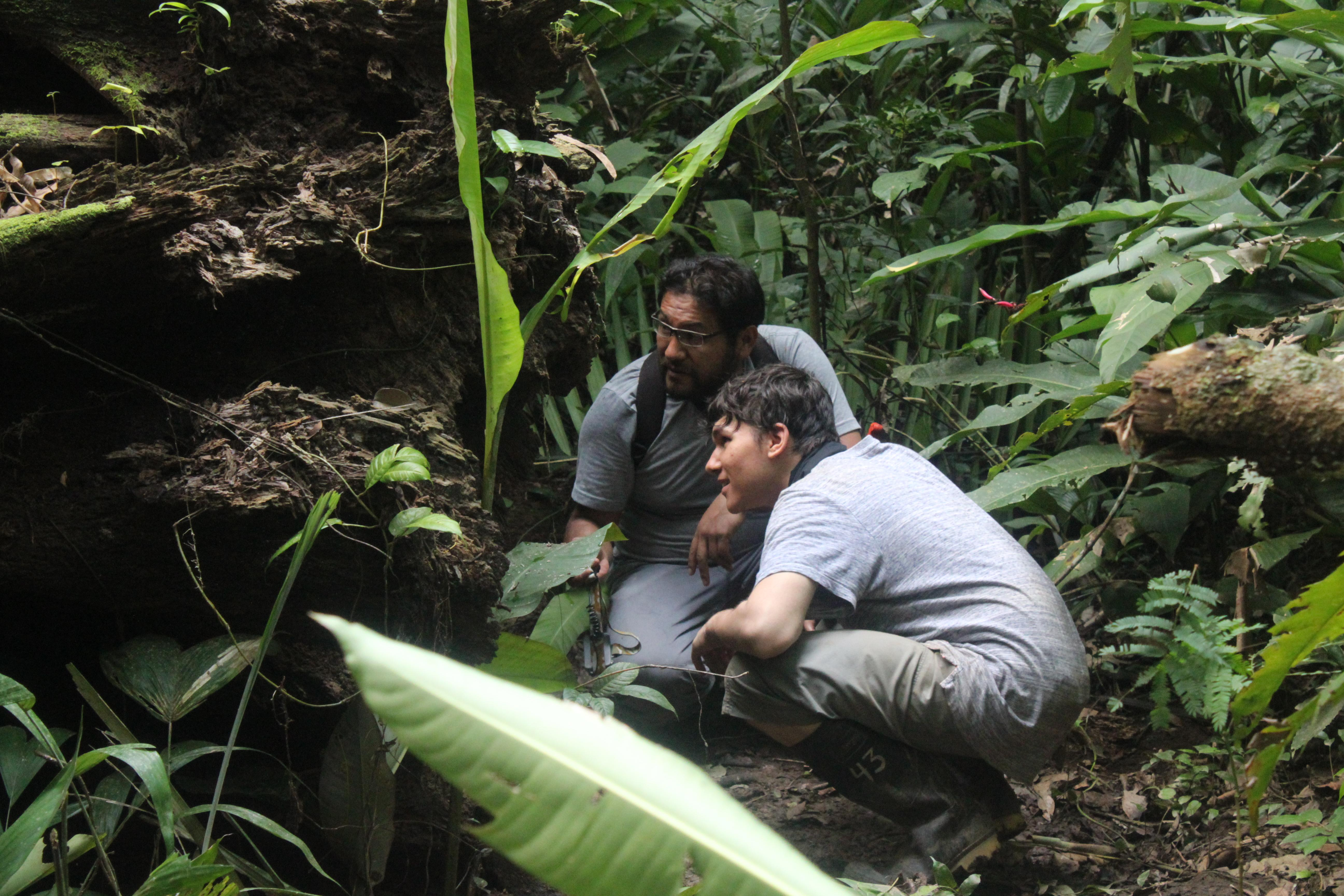 A volunteer is pictured inspecting roosting bats in a tree whilst on his rainforest conservation work experience project in Peru with Projects Abroad.